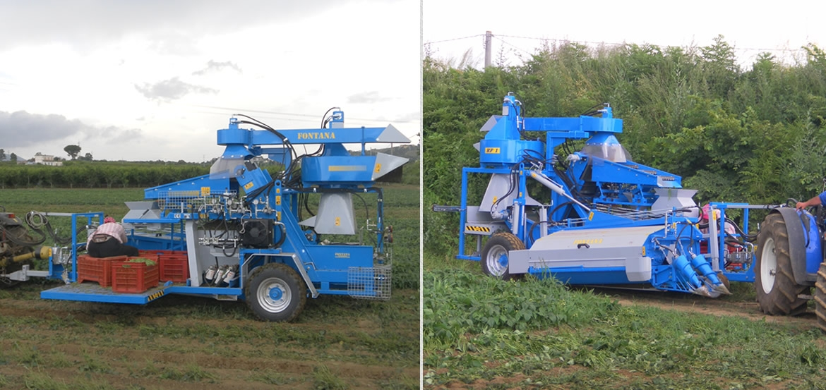 totally hydraulic TOWED HARVESTER for beans and greenbeans for fresh market RF1 series
